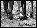 Photo de Jas0da
