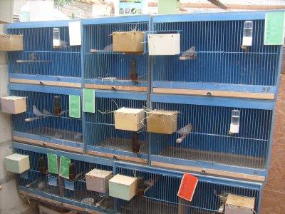 mis les nids pour saison 2012