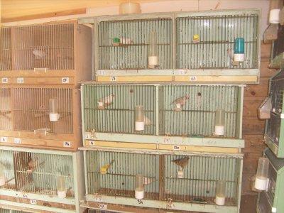 80 cages de prepara