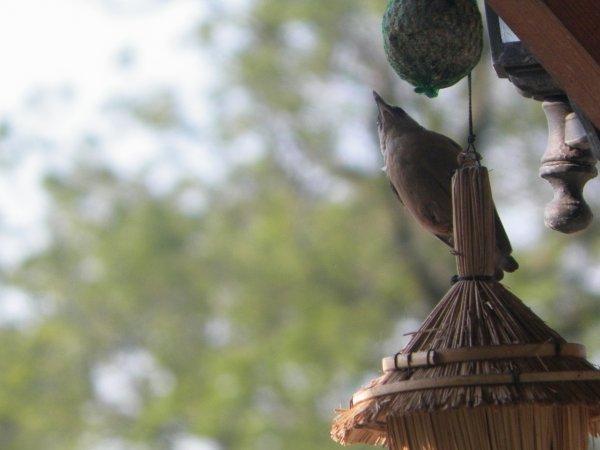 un nom a mettre sur ces oiseaux
