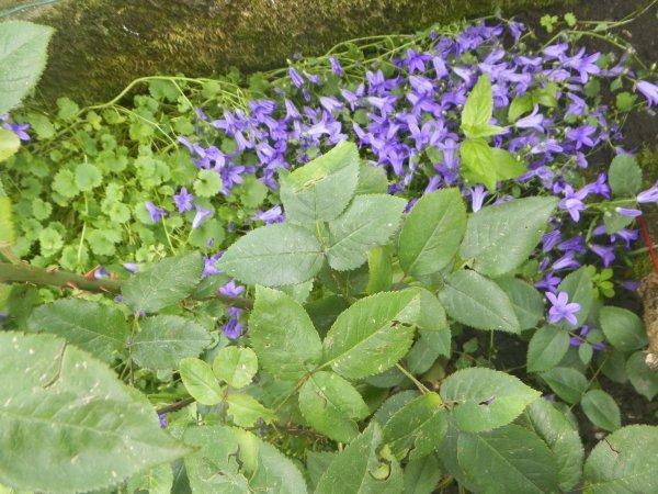 encore des fleurs et les 3 biloutes