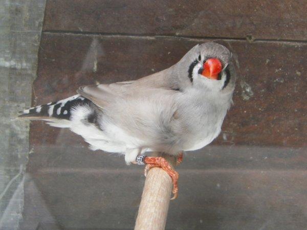 dos pale gris femelle