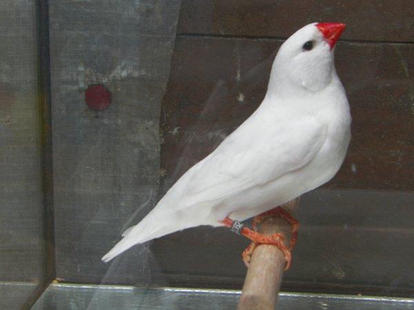 selle gris - blanc