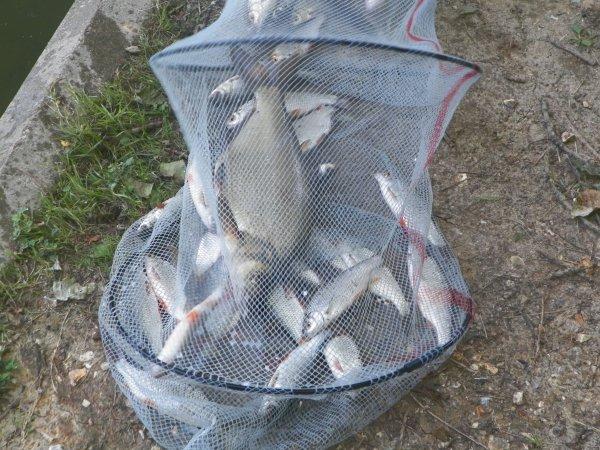 un tres beau week end de peche 40 poissons et tous repartis a l eau