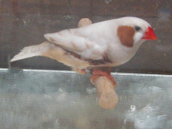 isabelle brun male et femelle