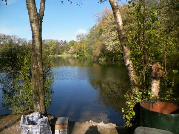 l'étang au printemps
