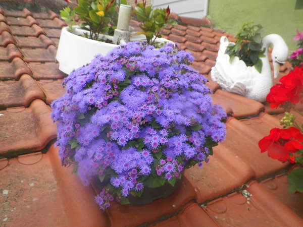 malgre la pluie quelques fleurs