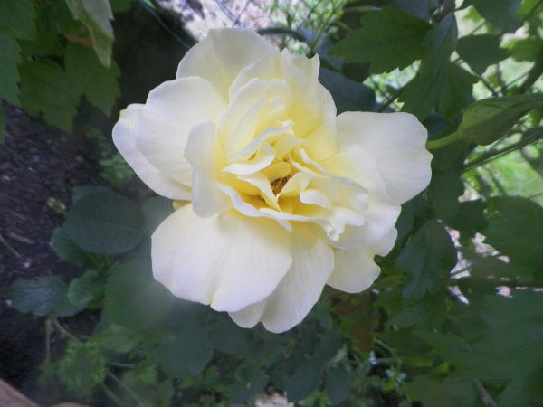 suite fleurs