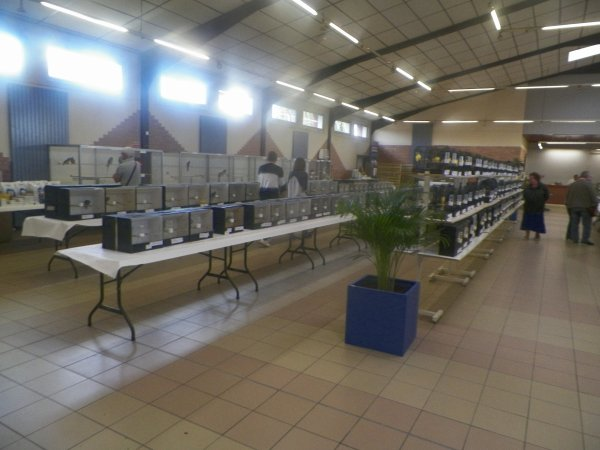 EXPO CONCOURS  NOEUX LES MINES 2017