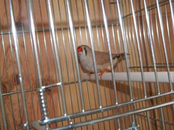 nouveau batiment oiseaux et nouveaux oiseaux