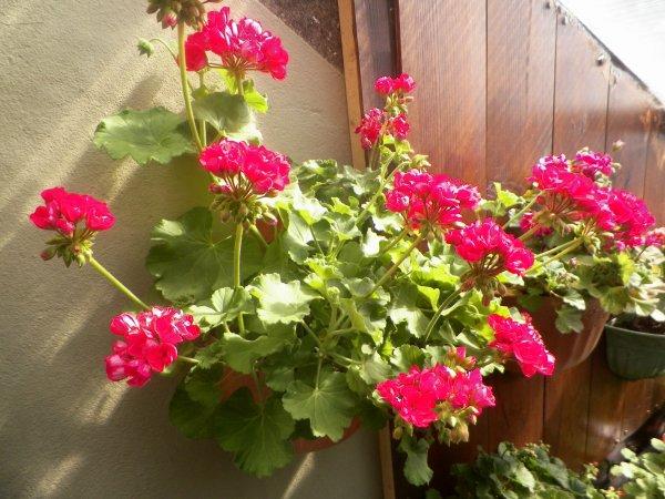 il fait beau sa fleurit