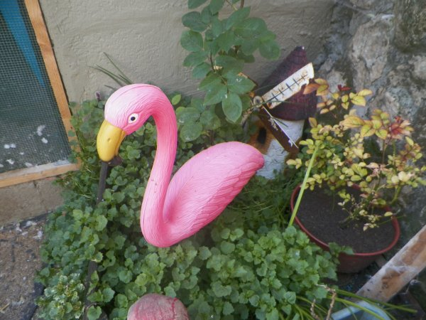 nouvel élevage de oiseaux a plumes