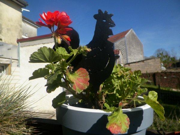 surprise dans mes pots fleurs