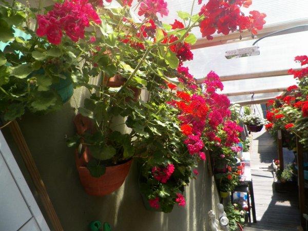 le printemps en fleurs