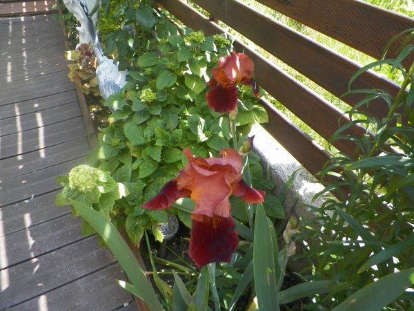 beau temps  belle fleurs