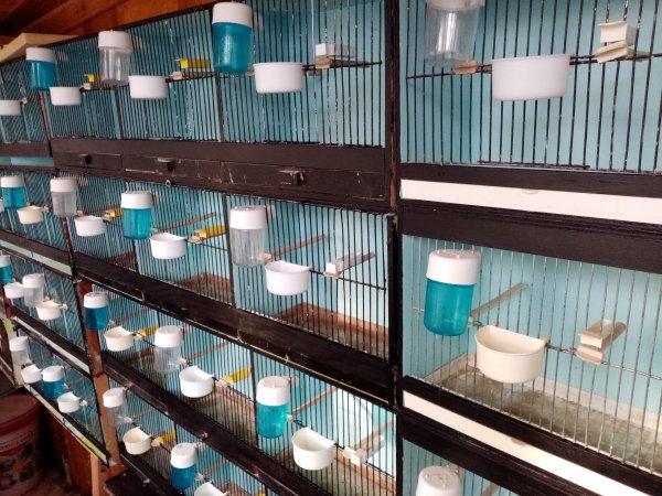 cages de préparation nettoyés et repeint 2021
