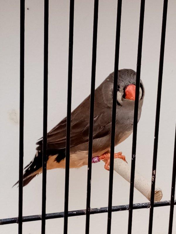 gris ( m et f )