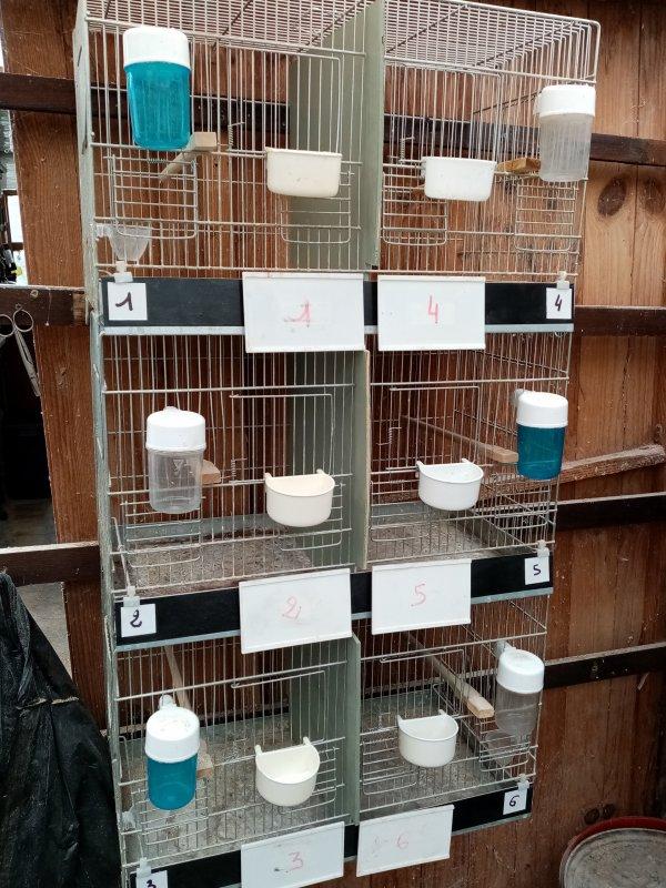élevage 2021 terminé derniéres cages nettoyées