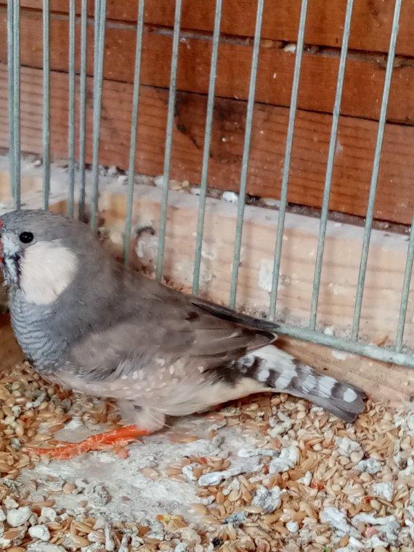 pastel gris oiseaux de travail
