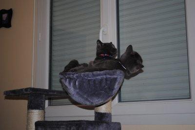 Folie et sa maman dans l'arbre à chat
