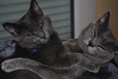Folie et sa maman, Cléo dans l'arbre à chat