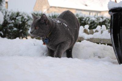 Forrest sous la neige...