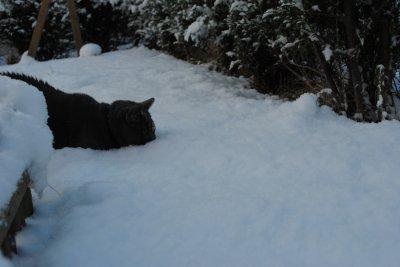 Sous la Neige... Deuxiéme jour !!!