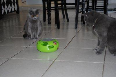 Nouveau JouJou des chats