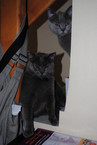 Cléo et son fils Forrest ...