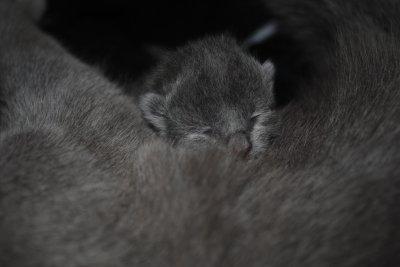 Bébé de Cléo