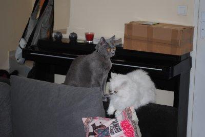 Cléo et Erès font les folles...