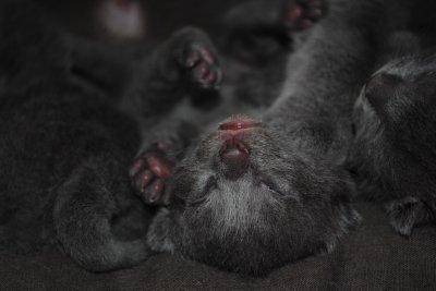 Les Kool Kitty 4