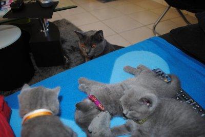 Les Kool Kitty 4 ont 1 mois et 3jours
