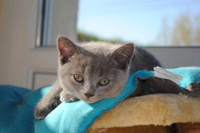 2éme vermifuge pour les kOOl Kitty !!!