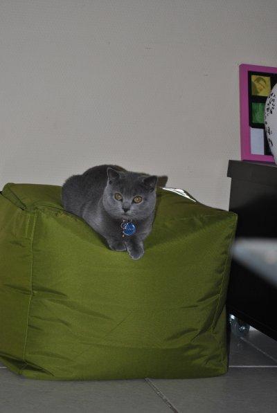 Nouvelle photo de Garfield