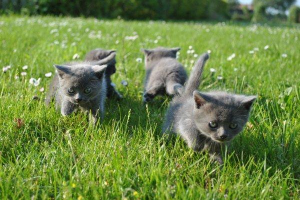 Promenade 1 mois des Kool Kitty 5
