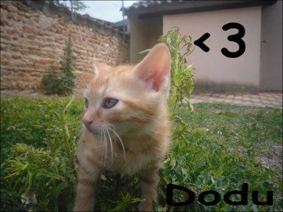 Mon chat :3