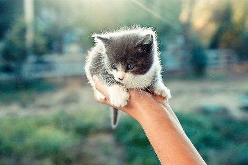 Oh un chaton ! *-* mes animaux préférer ! :p
