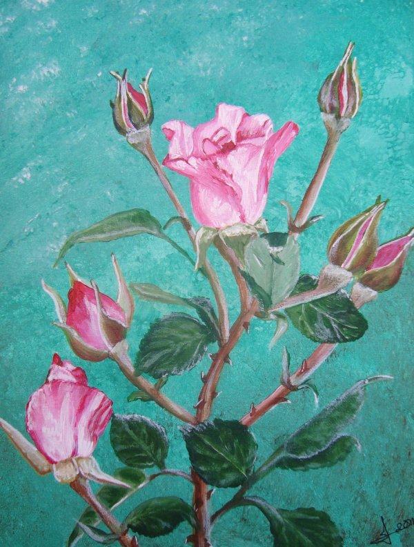 Roses 35x27