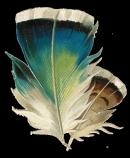 Photo de Les-plumes-de-l-espoir