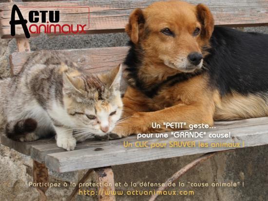 Important /!\ un petit geste pour une grande cause, les animaux
