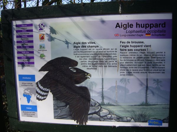 AIGLE HUPPARD