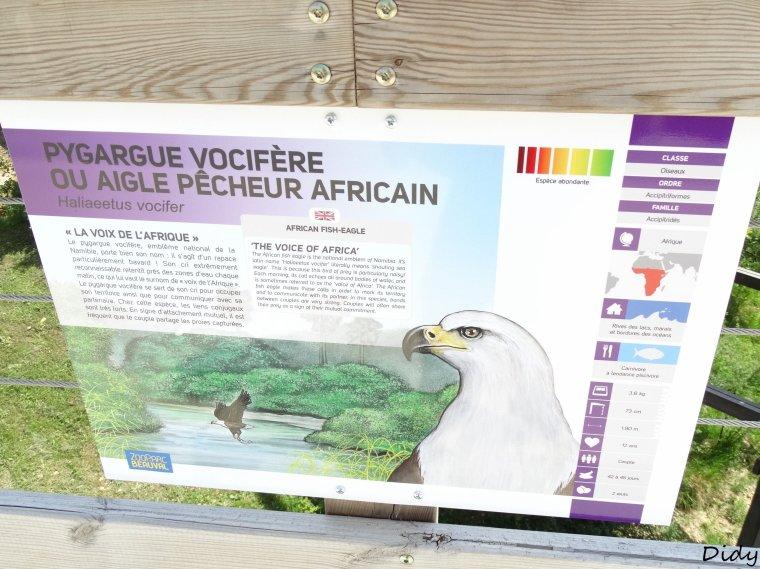 AIGLE PECHEUR D'AFRIQUE