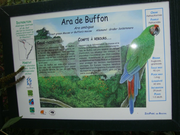 ARA DE BUFFON