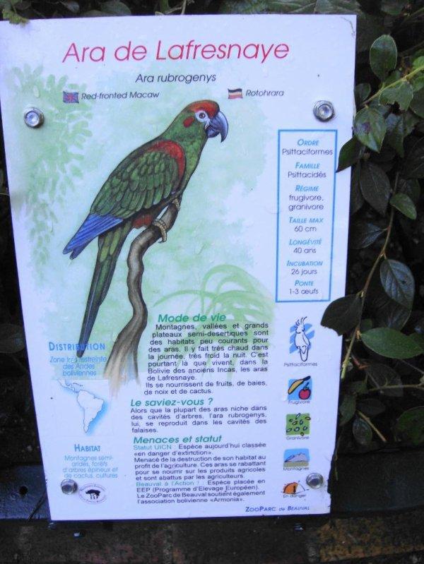 ARA DE LAFRESNAYE