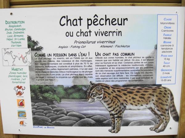 CHAT PECHEUR
