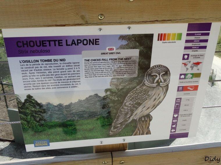 CHOUETTE LAPONE