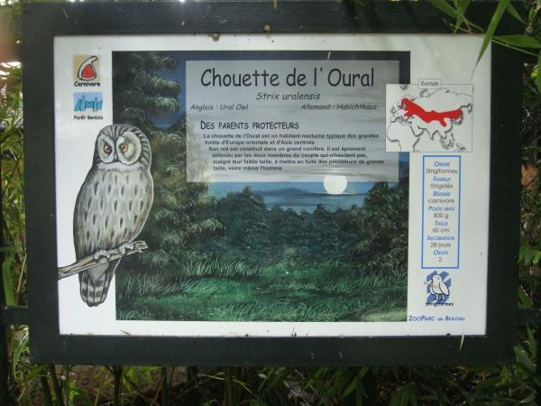 CHOUETTE DE L'OURAL