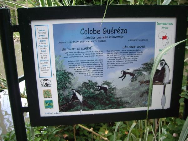 COLOBE GUEREZA