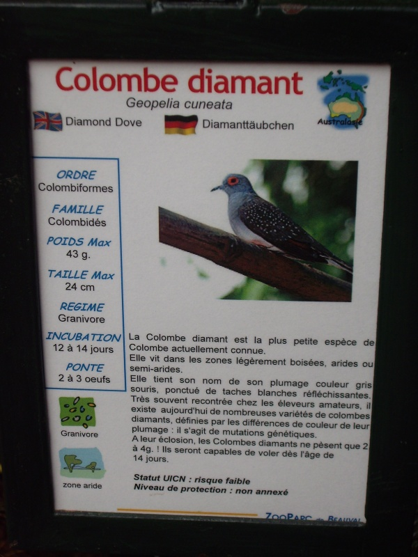 COLOMBE DIAMANT